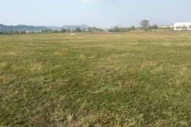 toke , Tirana, Agrare