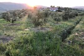shitet shtepi dhe toke  ( pemtari ), Agrare